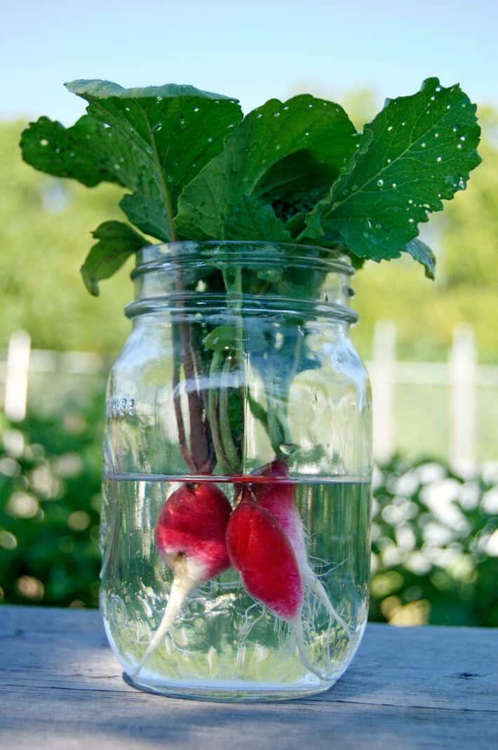 radish-in-jar
