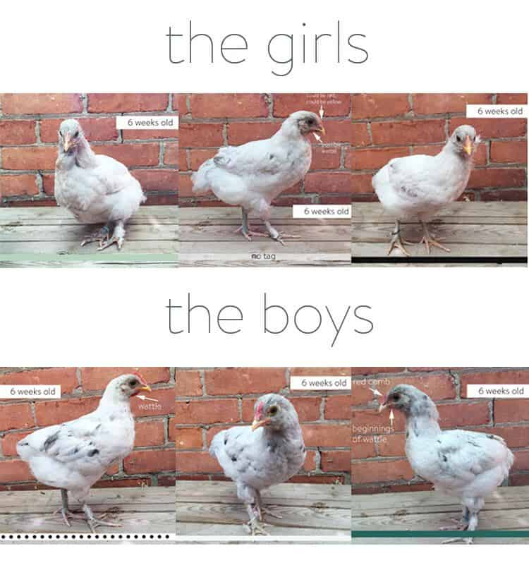 the-girls-and-boys
