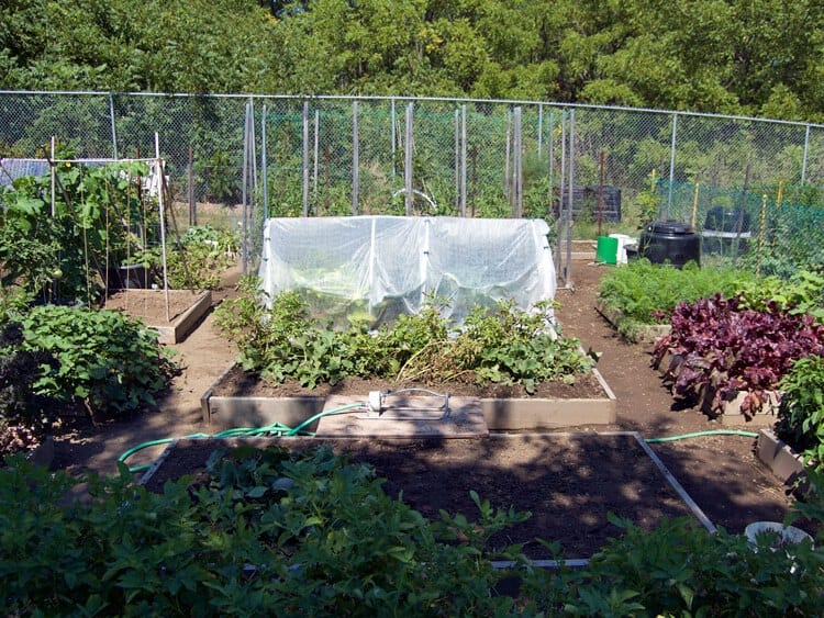 My Large Garden Plot and All That Grows Within It! | The Art of ...