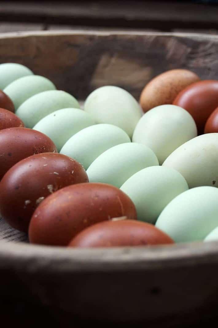 amereaucana-and-marans-eggs