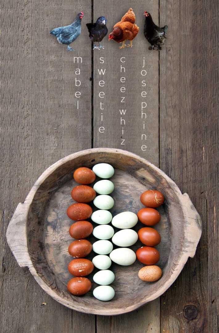 chickens-eggs