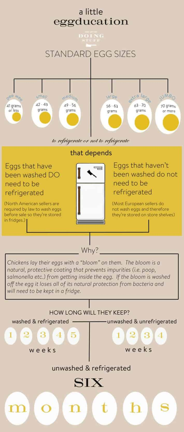 egg-infographic