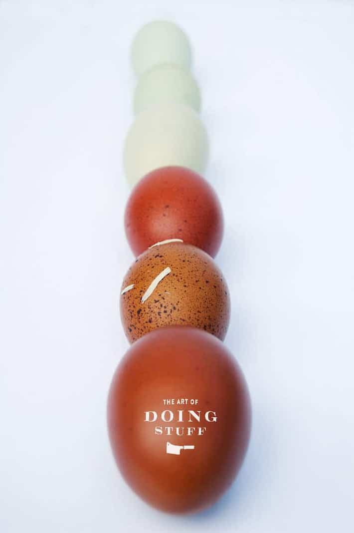 row-of-eggs-2
