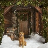 A golden retriever sits in front of Ken Falk's Montana porch at Christmas with natural wood and plain green garland.
