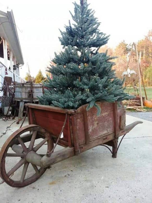 A rustic, antique wood wheelbarrow with a Christmas tree sitting inside of it.