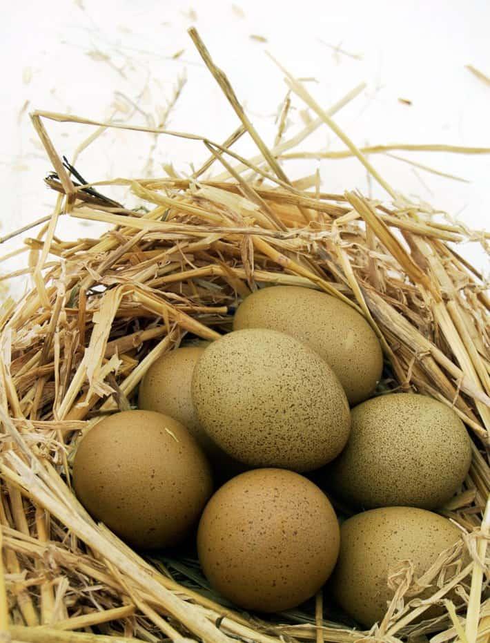 olive-egger-eggs