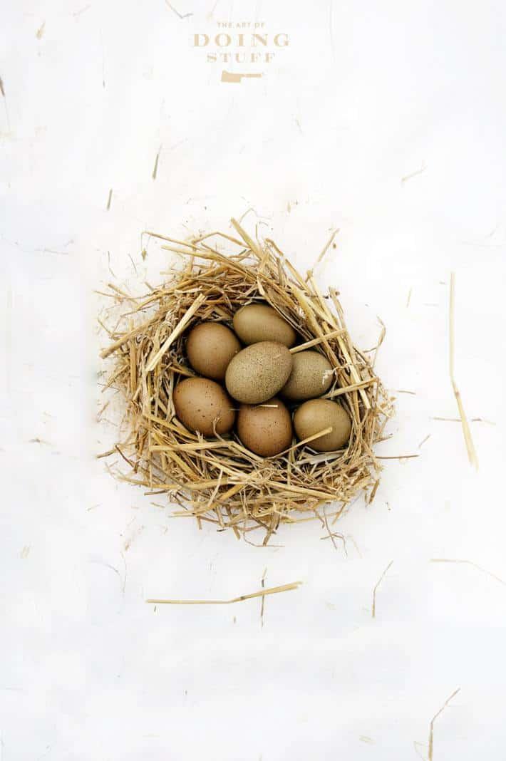 olive-egger-eggs-3