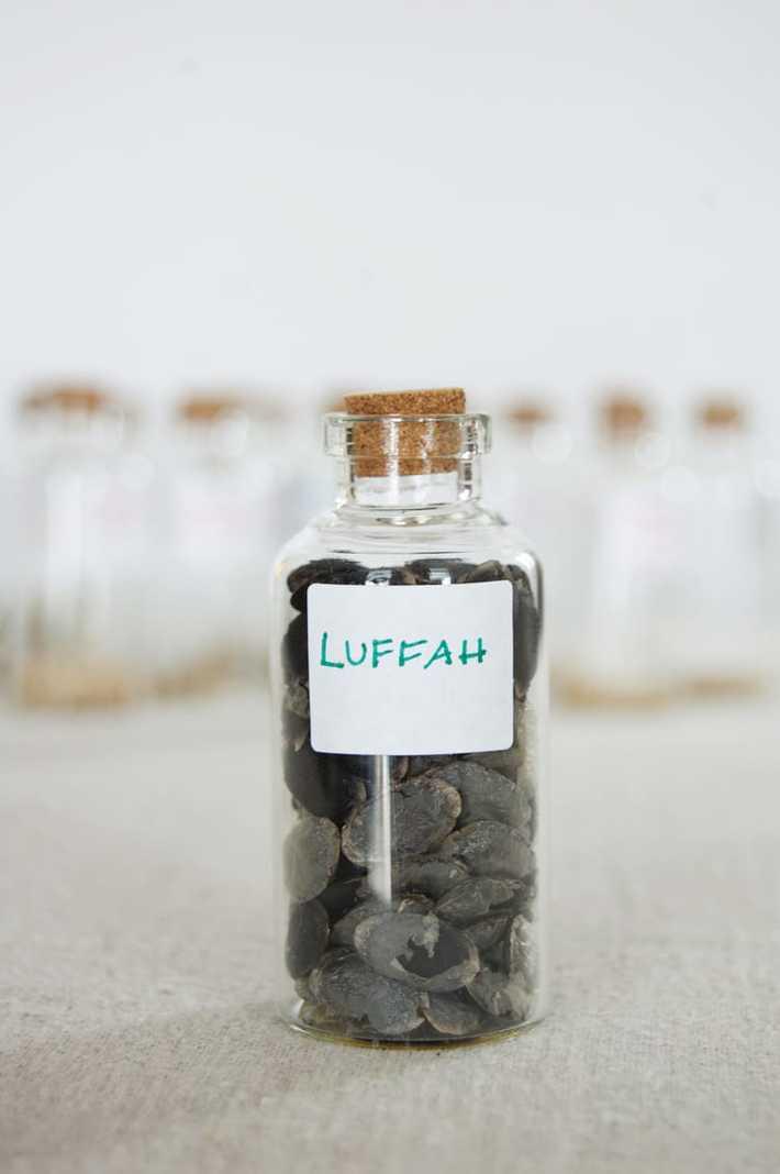 luffah-seeds