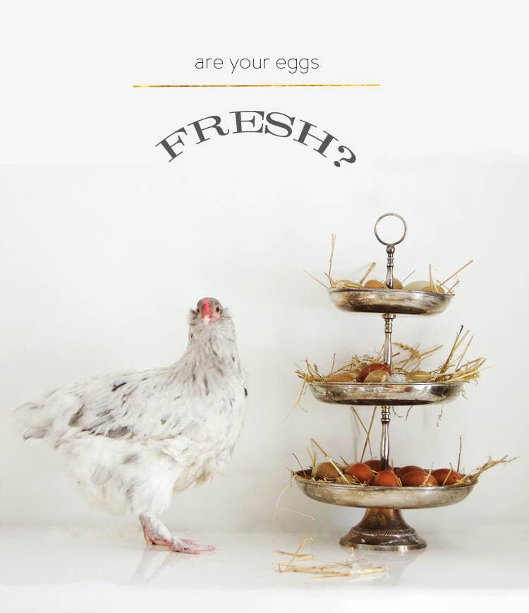 TAKE THIS TEST TO SEE IF YOUR EGGS ARE FRESH (WITH COMMENTARY FROM ...
