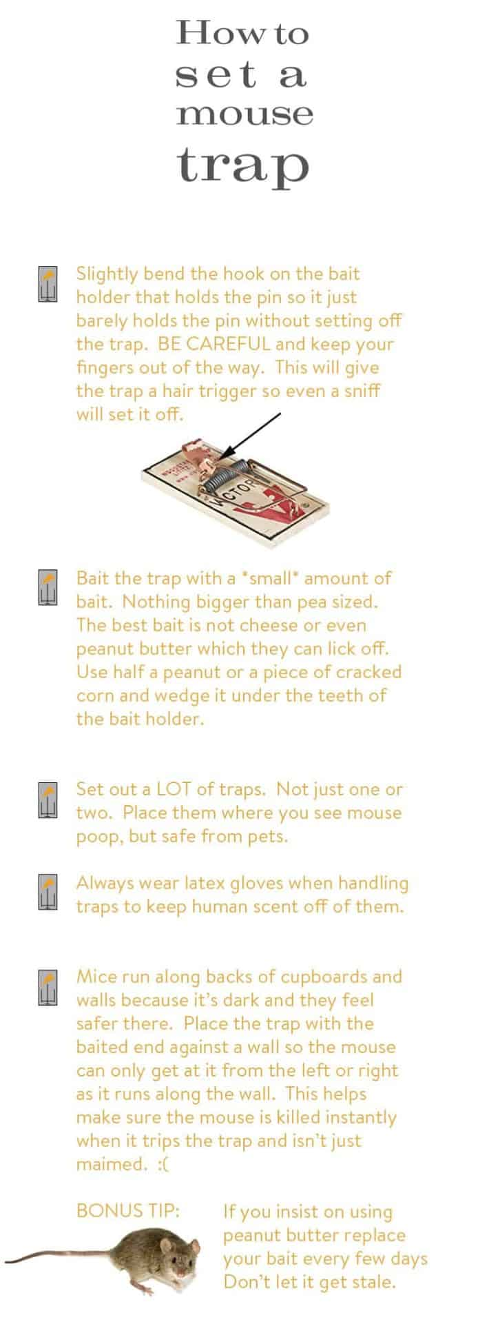 how-to-set-a-mouse-trap