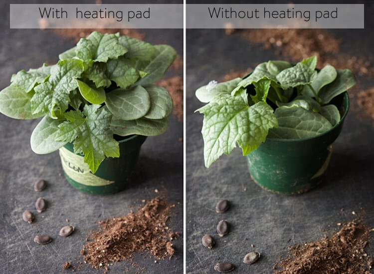 results-of-heating-pad-with-seedlings