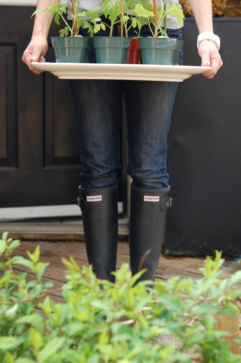 Woman in jeans and rubber boots standing outdoors holding white tray with a row of potted seedlings on them