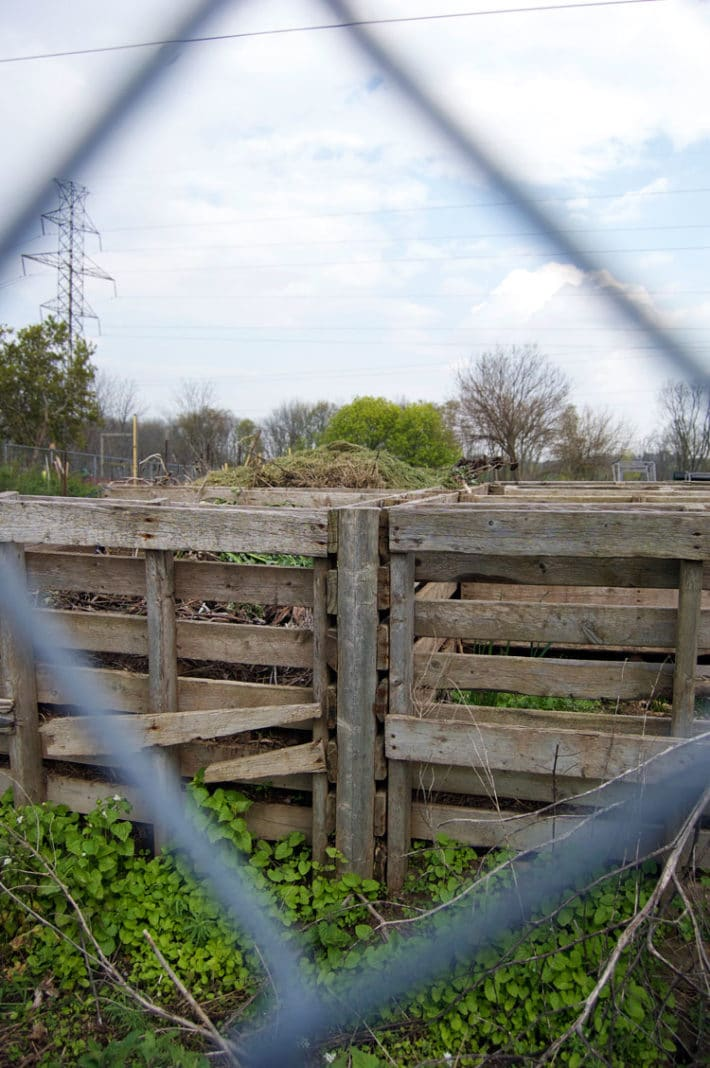Compost bins overflowing with green material made out of old pallets sit in a field seen behind a chain link fence.