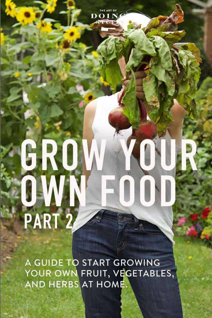 GROW YOUR OWN FOOD. PART 2.
