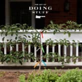 GROW A LITTLE FRUIT TREE. IT'S TIME TO PRUNE THAT ESPALIER.