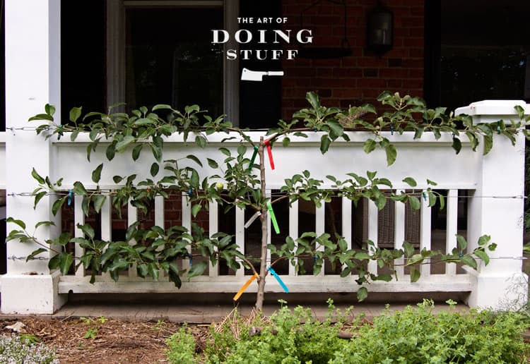 An espalier apple tree runs along a pure white porch railing.