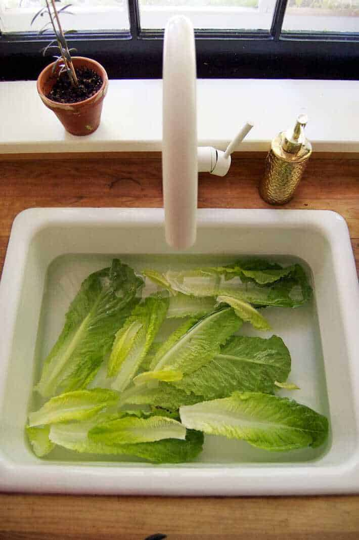 Romaine lettuce soaking in a white cast iron sink to revive it.