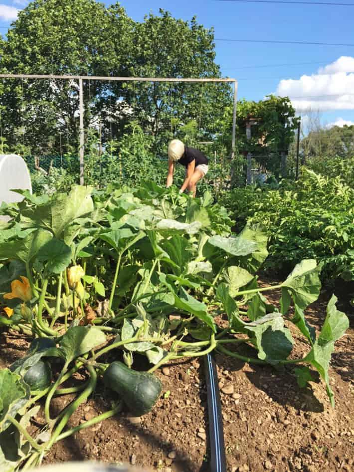 karen bertelsen gardening