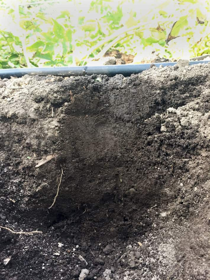 A cross section of soil shows how wide and deep moisture from a drip irrigation system flows.