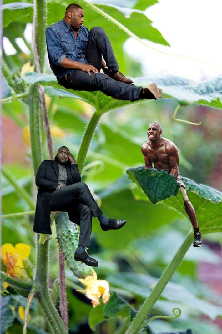 Idris Elba plant
