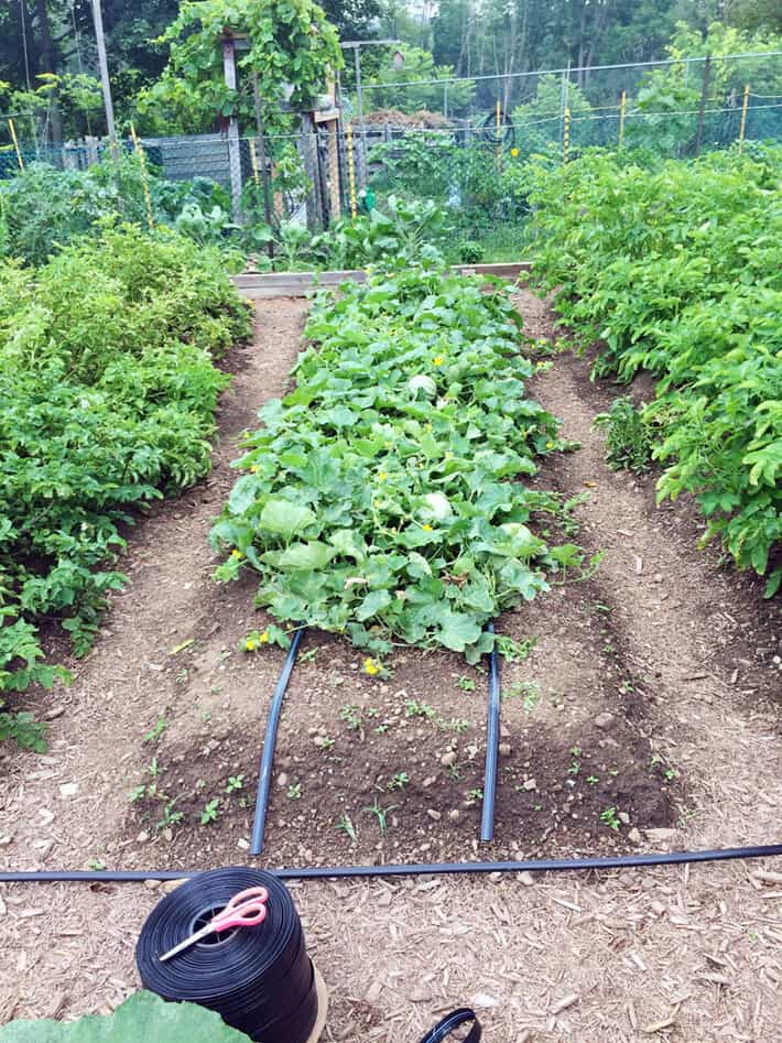 How To Install A Drip Irrigation System In Your Vegetable