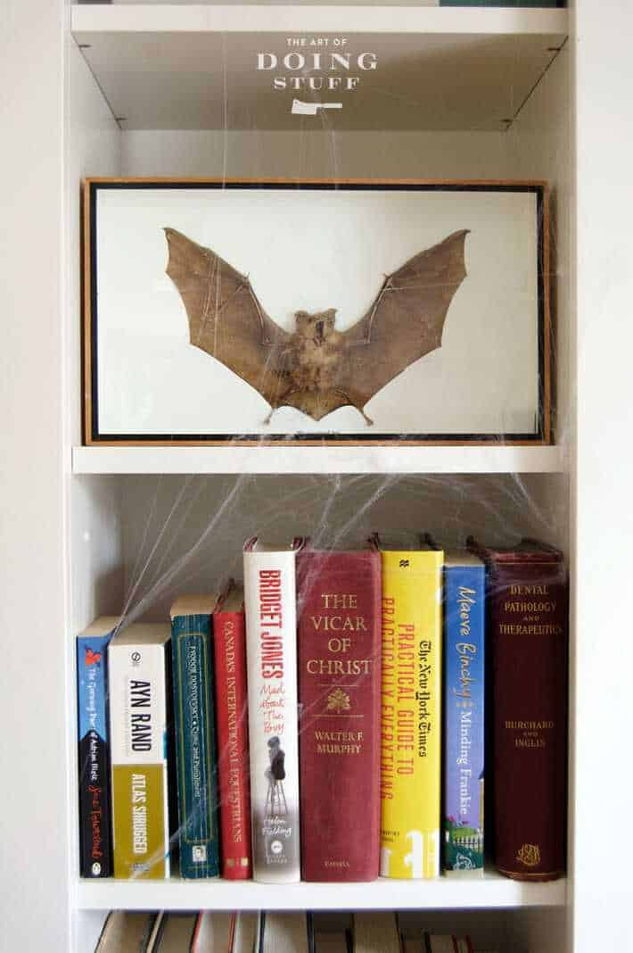 taxidermy dried bat halloween decorating