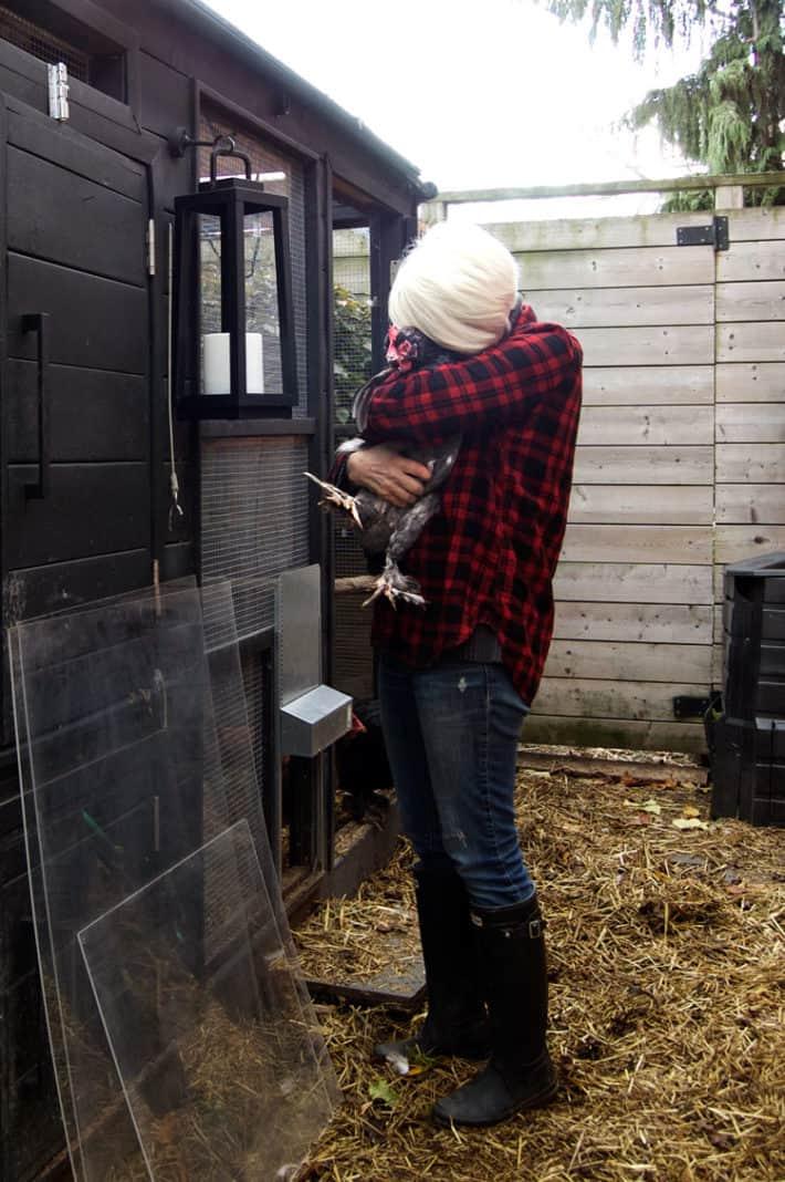Karen Bertelsen bear hugs a chicken outside her coop while preparing it for the winter.