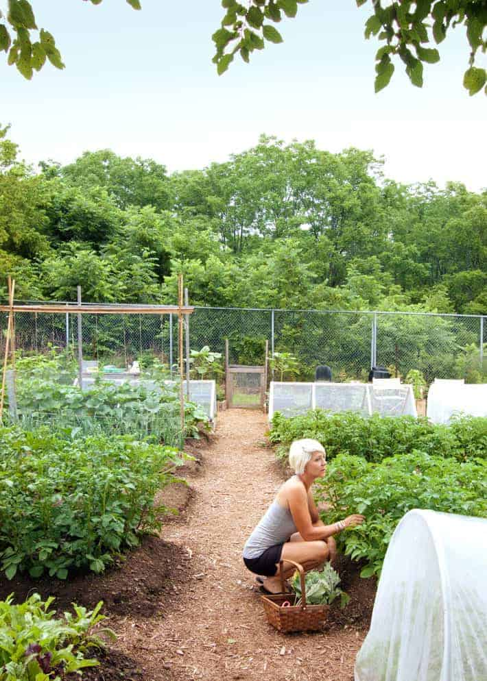Very large garden full of raised beds with cedar mulch pathways, blonde woman crouched with wicker basket gathering lettuce.