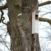 The Owl Box. Attracting Screech Owls to Your Yard.