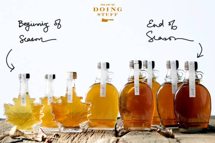 Bottles of home produced maple syrup in order of colour from golden to amber to dark.