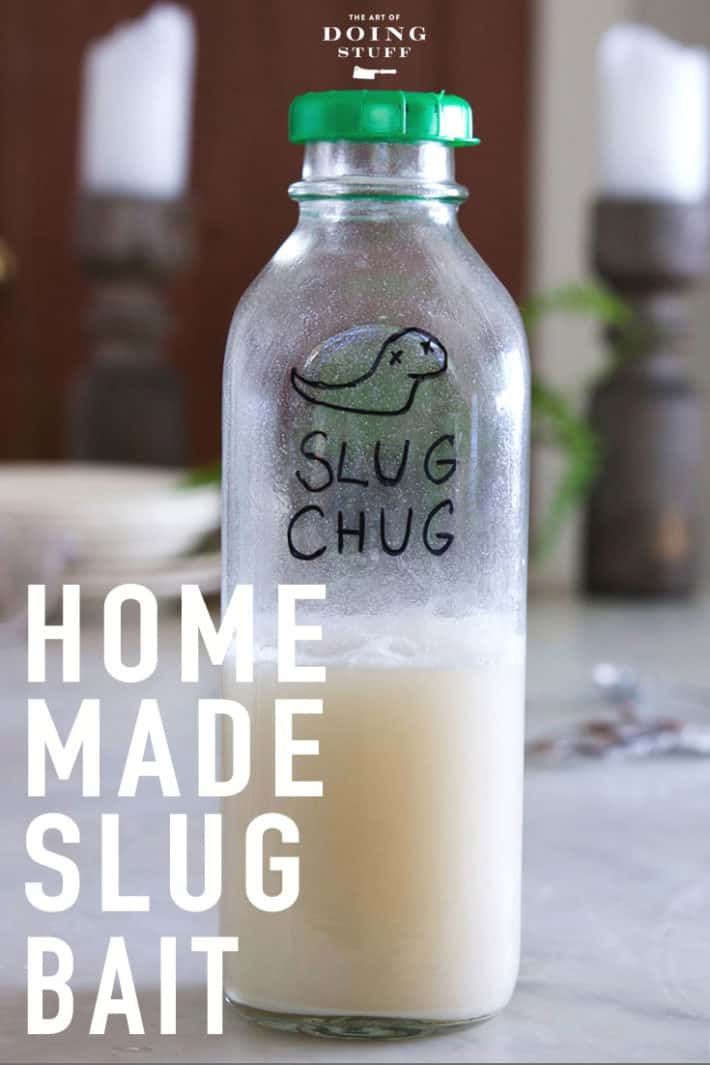 Have slugs? Me too. Are you using beer traps to catch them? DON'T! Beer is for drinking, not for catching slugs. Make your own DIY slug bait.