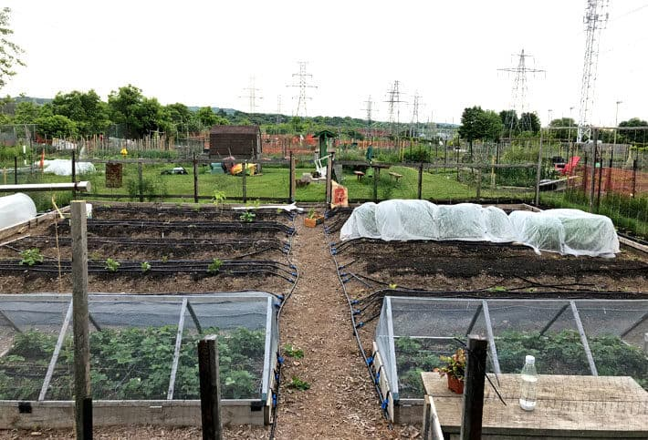 Full shot of 40'x40' garden with row cover, hoop houses and cages for vegetable protection.