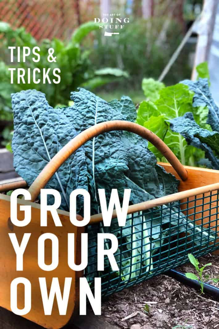 I'm NOT a vegetable gardening expert.  (No one is and if they say they are, they're deluded) But I do write for The Old Farmer's Almanac and Lee Valley about gardening so I know a couple of things about it.  Read about some of my tips and tricks.