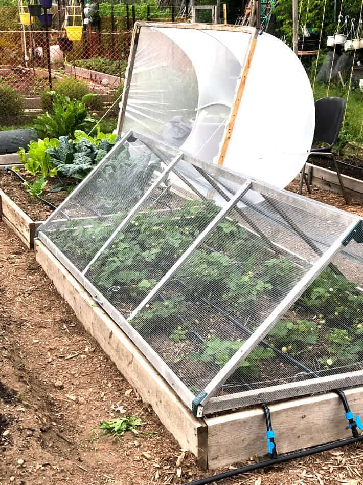 "DIY hoop houses, one net and one 1/4"" hardware cloth to protect kale and strawberries respectively."