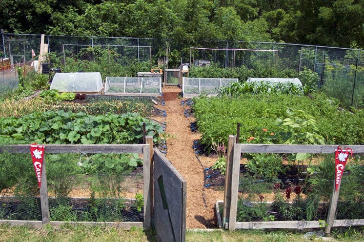 A Walking Tour Around My Vegetable Garden. | The Art of Doing ...