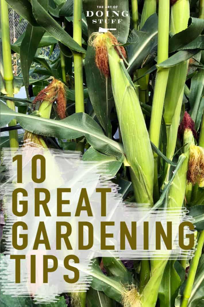 10 Great Vegetable Gardening Tips