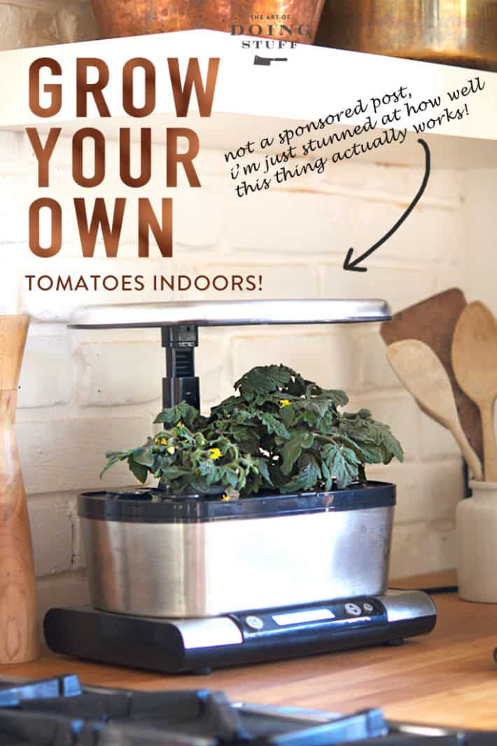 Is it Possible to Grow Tomatoes Indoors All Winter? Yep!