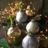 How to Make Wax Dipped Amaryllis Bulbs.