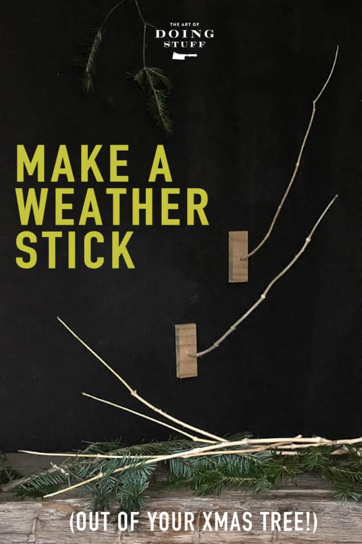 If you\'ve ever wondered about how those weather sticks work here\'s your answer. AND how to make one yourself.  Only one type of tree will work Christmas is the season to find one.