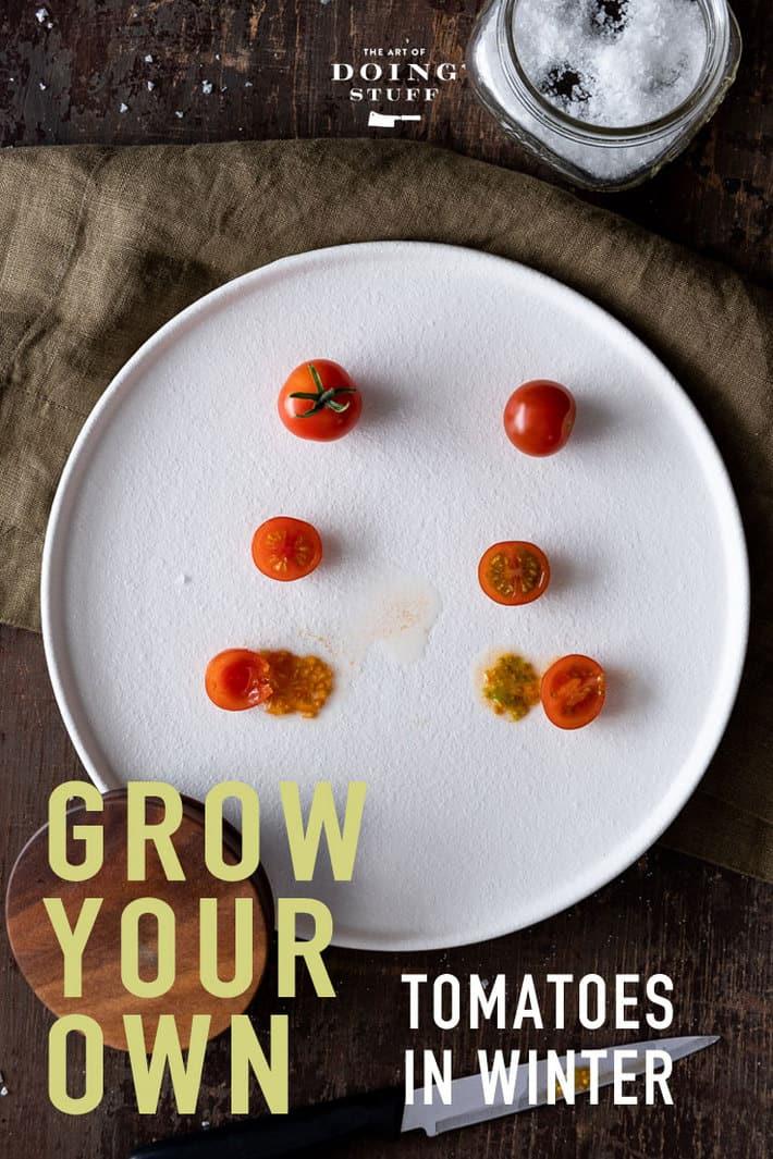 Taste Testing the Aerogarden Tomatoes. Aerogarden VS Grocery Store!