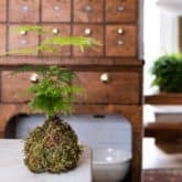 Quick & Easy Moss Pots to Boost Your Indoor Plant Game.