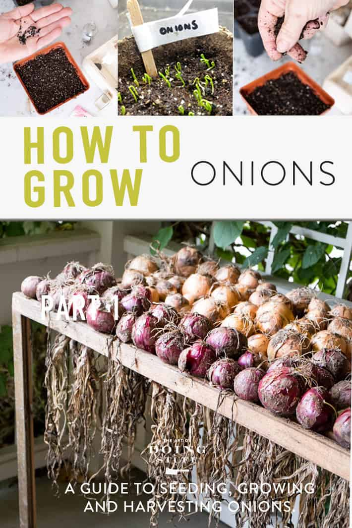 The Complete Guide to Growing Onions.