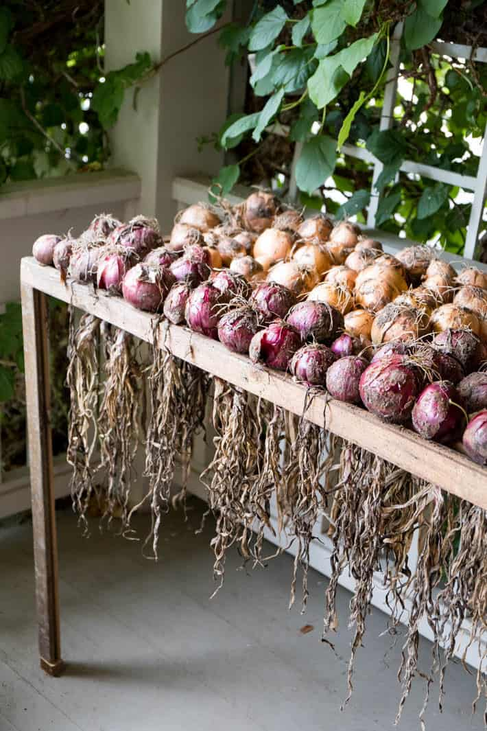 Curing onions outside on a wood onion curing rack protected on a front porch.