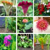 Growing a Cutting Garden. Flowers, Greenery, & Vegetable Choices.