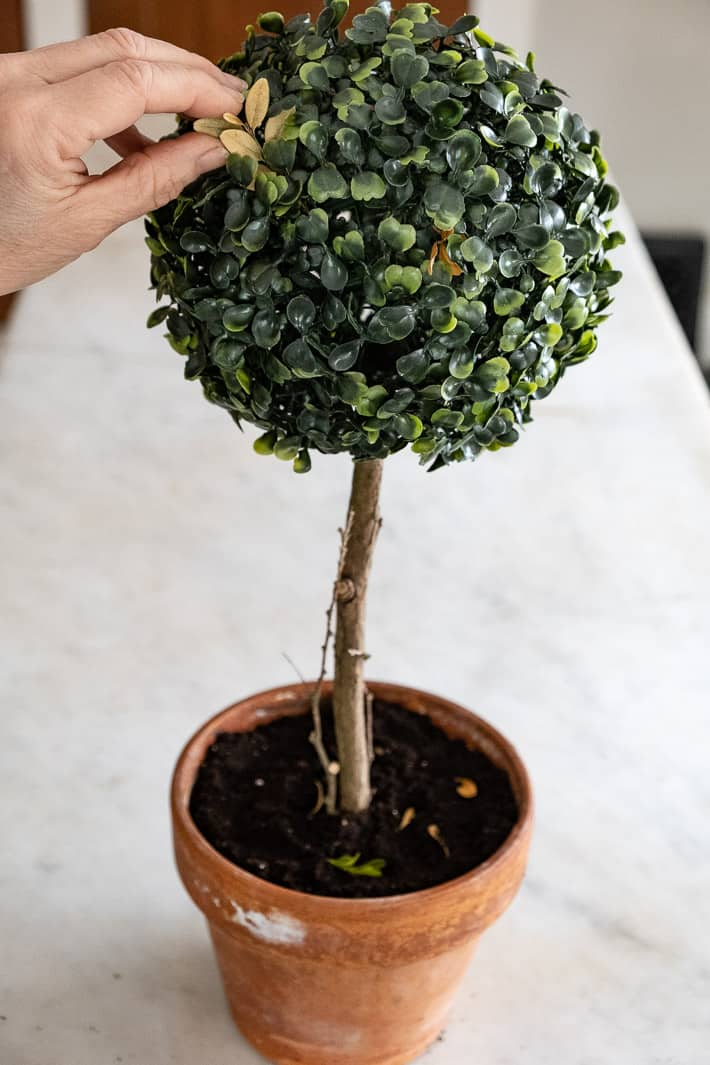 Adding real boxwood leaves to artificial boxwood ball to make it more realistic looking.
