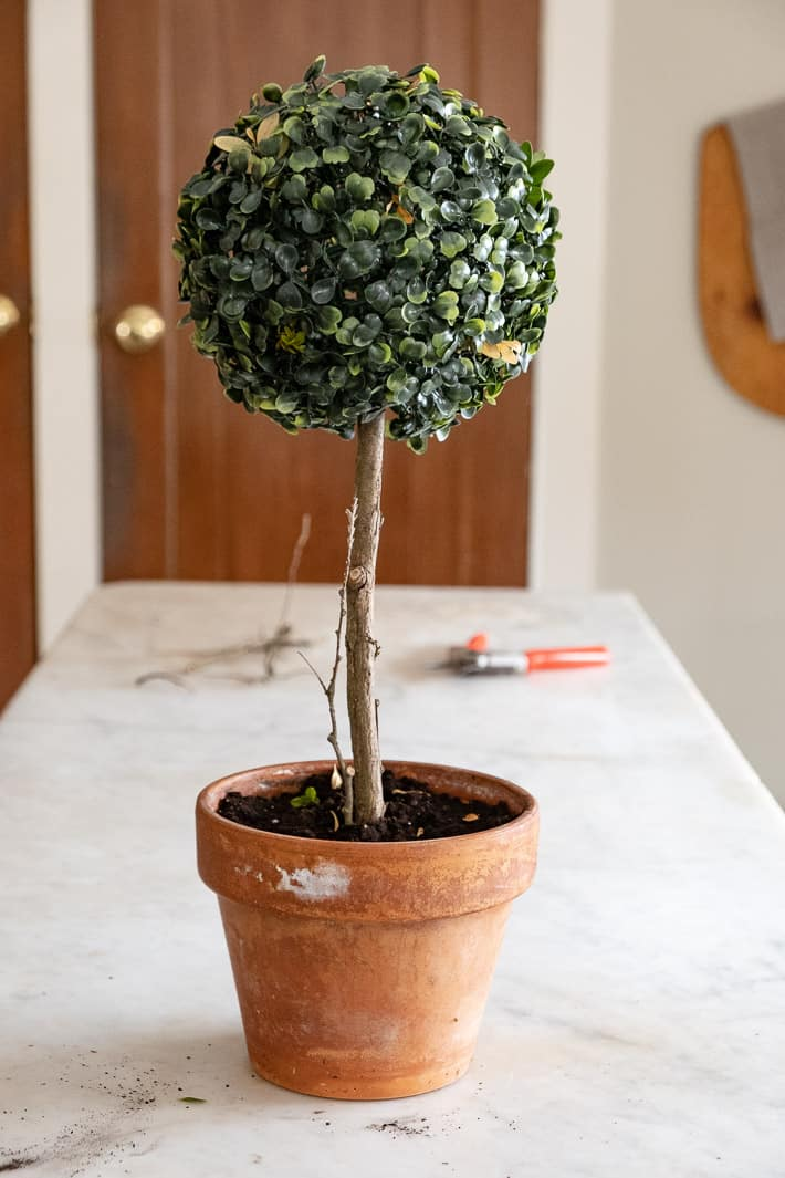 An artificial boxwood topiary with real branches, leaves and twigs to make it look more realistic.