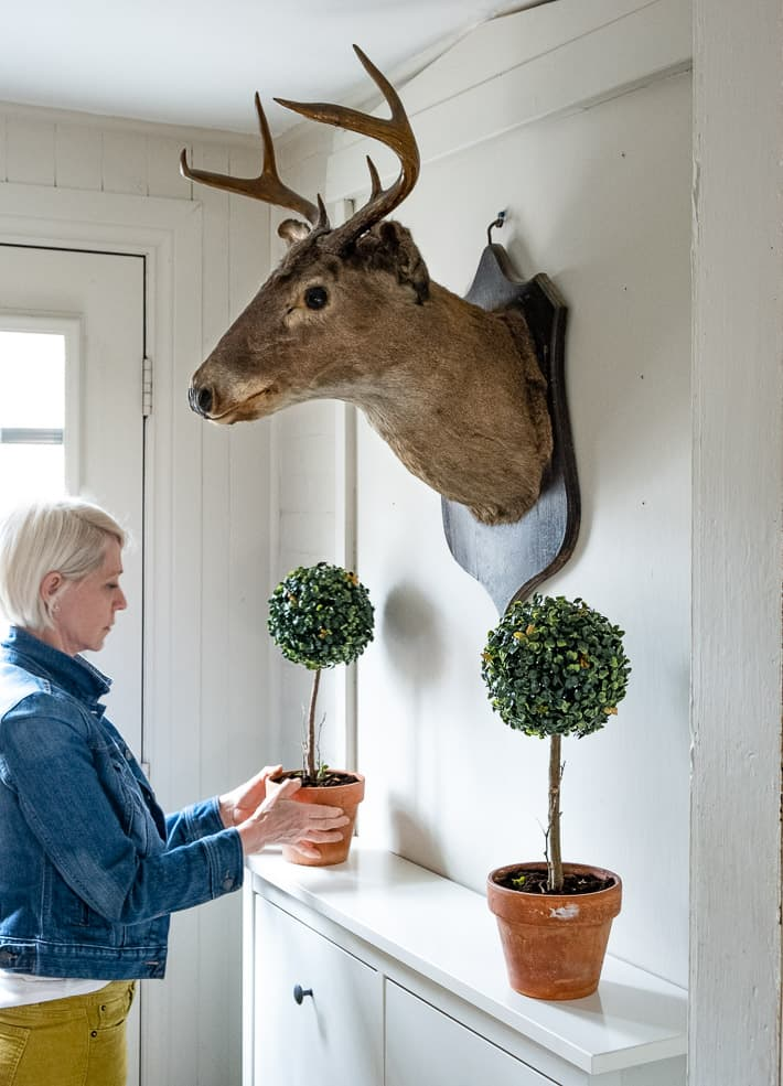 Setting DIY boxwood topiaries onto sideboard in rustic room with deers head.
