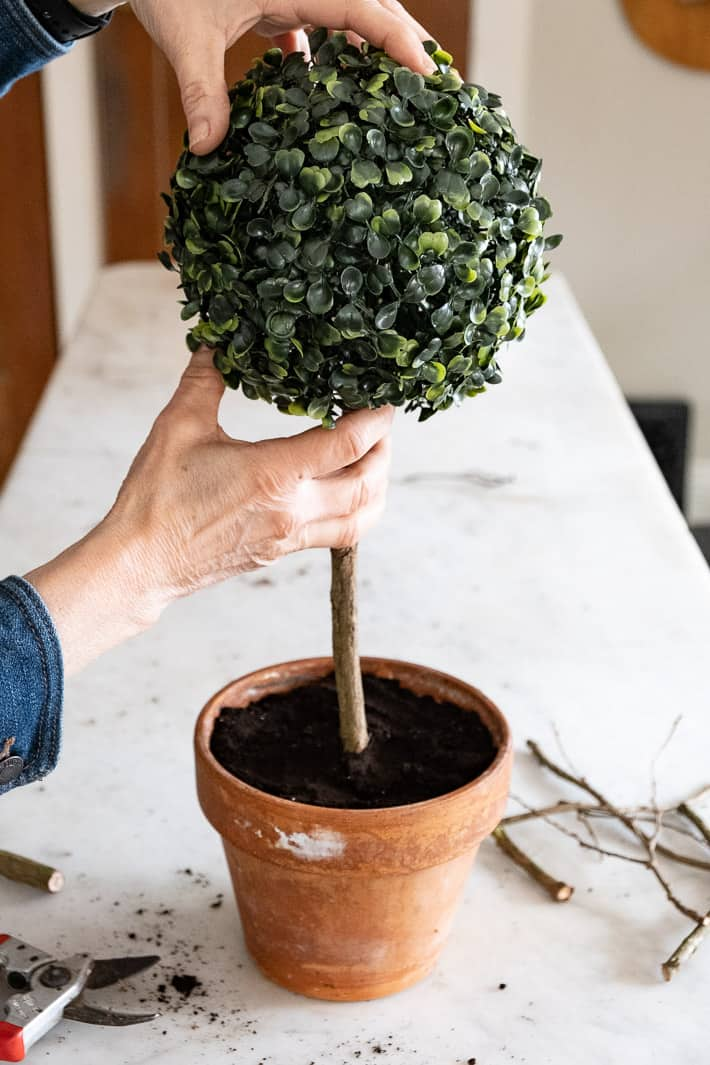 Setting artificial boxwood ball onto stick in clay pot to make topiary.