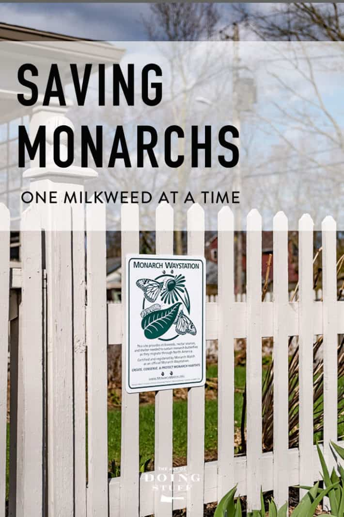 If You're Serious About Raising Monarchs This Post Is For You.