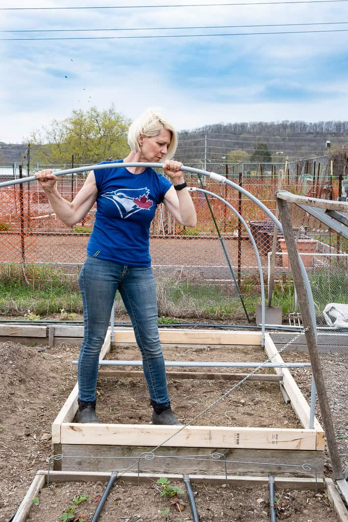Karen Bertelsen in Blue Jays t shirt bends conduit into place on a hinged hoop house she's building in a large garden.